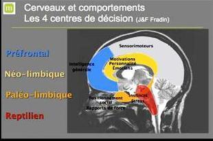 cerveau-by-Fradin.jpg