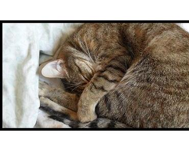La sieste : literally sleep your way to the top